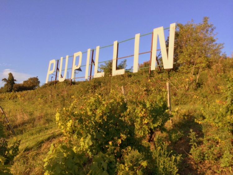Pupillin sign Tony Bornard's vineyard