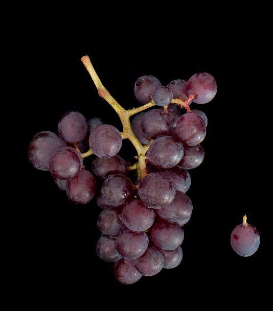Ploussard-grapes