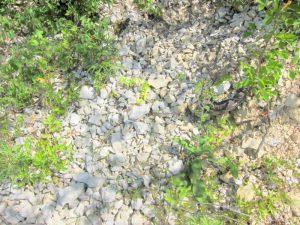 Terroir - De Moor vineyard limestone