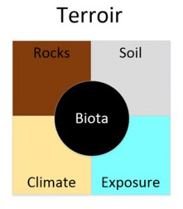Terroir - rocks, soil, climate, exposure and biota