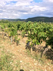 Bock-Vineyard-Ardeche