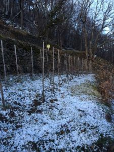 Mito-Terraced-Vineyard