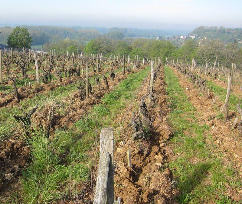 Careme-Le-Clos-Vineyard