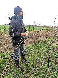 Fevrier-in-vineyard
