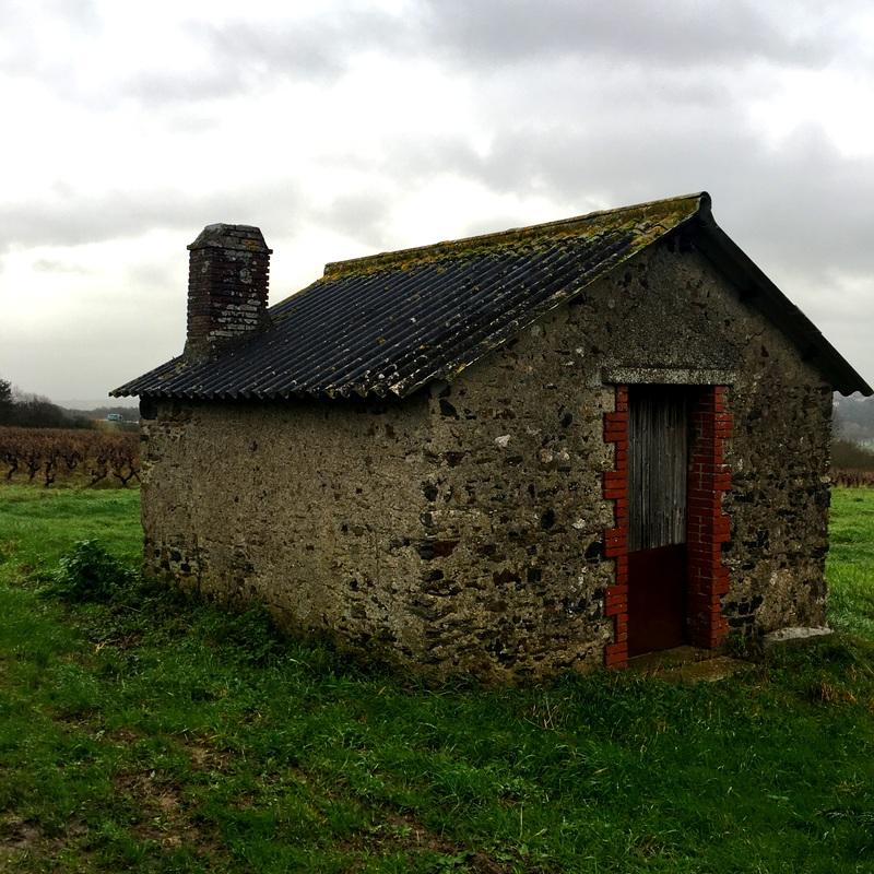 Hut-in-vineyard