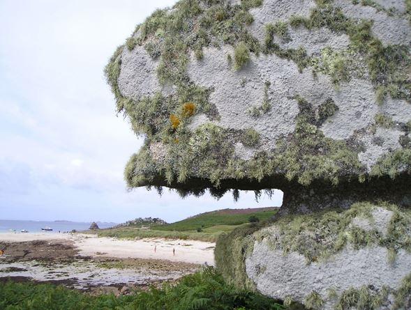 Lichen on weathered rocks